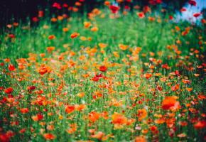 flowers, representing self care